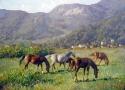 Гребенщиков С.В. «Лошади, освещенные солнцем». Холст, масло, 45х60, 2011 год